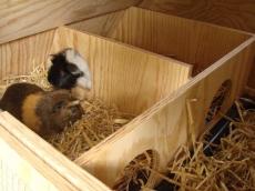 Fahrbarer Meerschweinchen-Stall, Kaninchen-Gehege