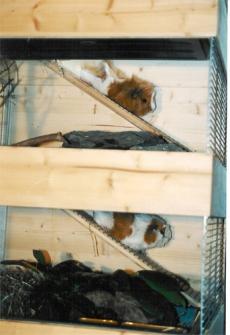 Meerschweinchen-, Hamster-, Rennmäuse und Ratten-Stall