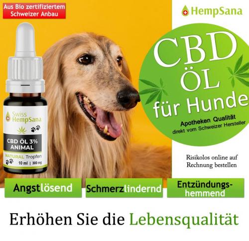 Positive Wirkung des CBD Öls bei Hunden